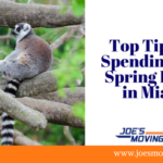 Top Tips for Spending Kids Spring Break in Miami